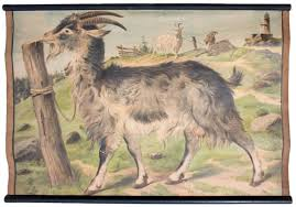 Goat Chart Educational Chart Of A Goat From C C Meinhold Söhne 1891