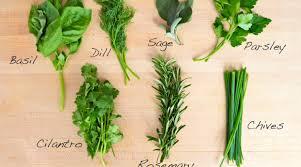 Fresh Basil To Dried Basil Conversion Chart Substituting Dried Herbs For Fresh Conversion Chart