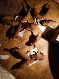Brookside Puppies - Innlegg | Facebook