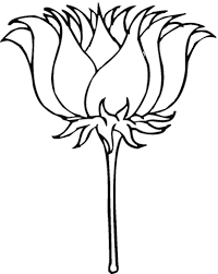 Lotusbloem In Bloei Kleurplaat Gratis Kleurplaten Printen