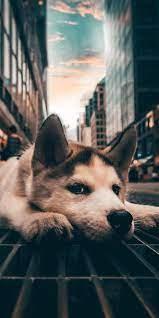 Cute dog wallpaper ...