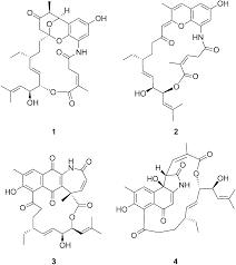 Divergolide Congeners Illuminate Alternative Reaction Channels For