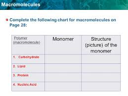 Monomer And Polymer Chart Macromolecule Of Life Poster You Will Love Macromolecules