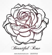 Small Picture Sketch Rose Hand Drawn Realistic Flower Stock Illustration