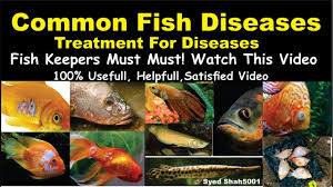 Types Of Aquarium Fish Disease And Treatment Of Diseases Hindi Urdu With English Sub Fishdisease