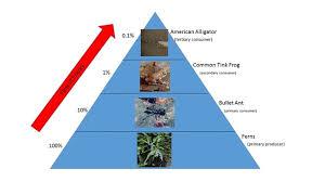 food web pyramid food web pyramid