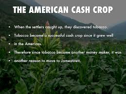 Image result for successful cash crop.