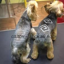 блеск тату для собак в твери запись 7 4822 60 05 77