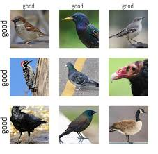 Todaysbird Pest Birds Alignment Chart Insects