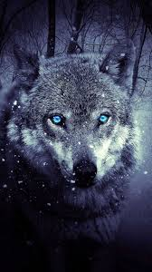 Wolf Wallpapers HD iPhone 6S - Wolf ...