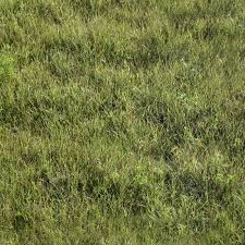 wild grass texture. Beautiful Texture Wild Grass On Grass Texture A
