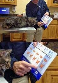 Cat Bmi Chart