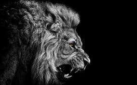 3d lion wallpapers free download.  Download Res 2560x1600  Intended 3d Lion Wallpapers Free Download