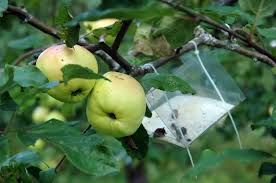 Homemade Pest Remedies  Organic Gardener Magazine AustraliaHomemade Spray For Fruit Trees