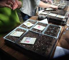 Office gardening Workplace Renees Garden Gardening With Our Office Renees Garden Seeds