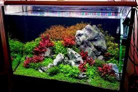 Light Requirement For Planted Aquarium How To Choose The Best Aquarium Light The 2hr Aquarist