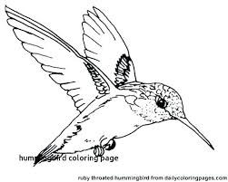 Eastern Bluebird Coloring Page Free Printable Pages Mountain