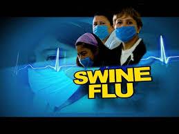 essay on the swine flu in swine flu attacked jpg