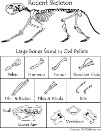 Owl Pellet Skeleton Reconstruction Chart Heres A Bone Chart To Use When Dissecting Owl Pellets