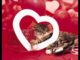 valentine cat images. Simple Cat Every Day Should Be Valentineu0027s Day Why Because You Remember To  Tell Your Cats How Much Love Them Every Day This Expression Of Not  With Valentine Cat Images