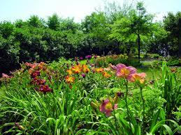garden com.  Garden Plants Throughout Garden Com