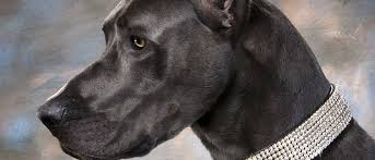 dog collars leads