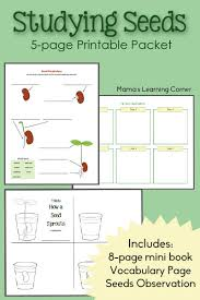 Plant Growth Observation Chart Studying Seeds Printable Mini Book Seed Chart And