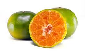 orange fruit names. Perfect Names Orange Fruit Other Names Are Les Oranger Sweet Orange Citrus Sinensis  Citrus Throughout Fruit Names