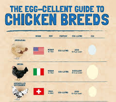 The Egg Cellent Guide To Chicken Breeds Community Chickens