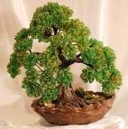 Деревце из бисера мастер класс