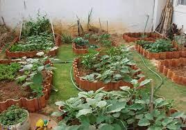 lush vegetable garden in your terrace