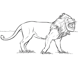 Small Picture Excellent Lion Coloring Pages Best Coloring KI 1153 Unknown