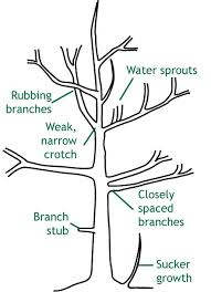 Growing Fruit Trees Indoors  HGTVWhen Do You Plant Fruit Trees