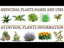 Medicinal Plants And Their Uses 20 Ayurvedic Plants Names