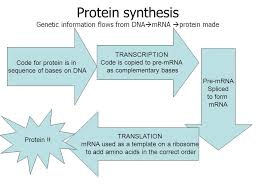 Homework Complete Comparison Chart On Dna Trna And Mrna If