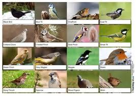 British Garden Birds Chart Garden Birds Resources Teaching Ideas
