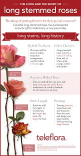 Sweet Heart Rose Size Chart Infographic What Makes A Rose Long Stemmed Teleflora Blog