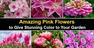 types of pink flowers with name and