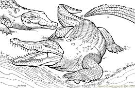 Small Picture Crocodile Coloring Page Free Alligator Coloring Pages