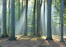 Poster Wald Im Sonnenlicht 140x100 Cm Online Bei Roller Kaufen