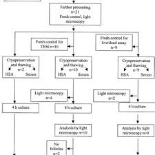 Flow Chart Of Tissue Handling In The Study Download