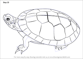 Small Picture Step by Step How to Draw a Painted Turtle DrawingTutorials101com