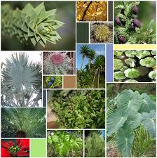<b>Leaf</b> - Wikipedia