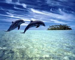 Sea Quotes Cool Sea Quotes Ocean Quotes Water Quotes Beach Quotes