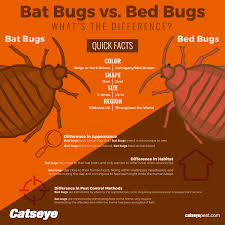 Bat Bugs vs Bed Bugs What s the Difference