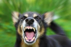 12 Year Us Dog Bite Fatality Chart The Most Dangerous Dog Breeds Slideshow The Active Times