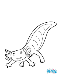 Small Picture Mexican salamander coloring pages Hellokidscom