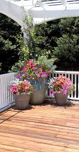 plants for patios in the shade icamblog natural flower