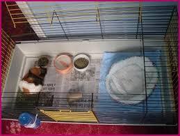 hospital guinea pig cage