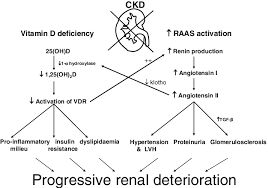 the vitamin d axis and the renin angiotensin aldosterone system raas in